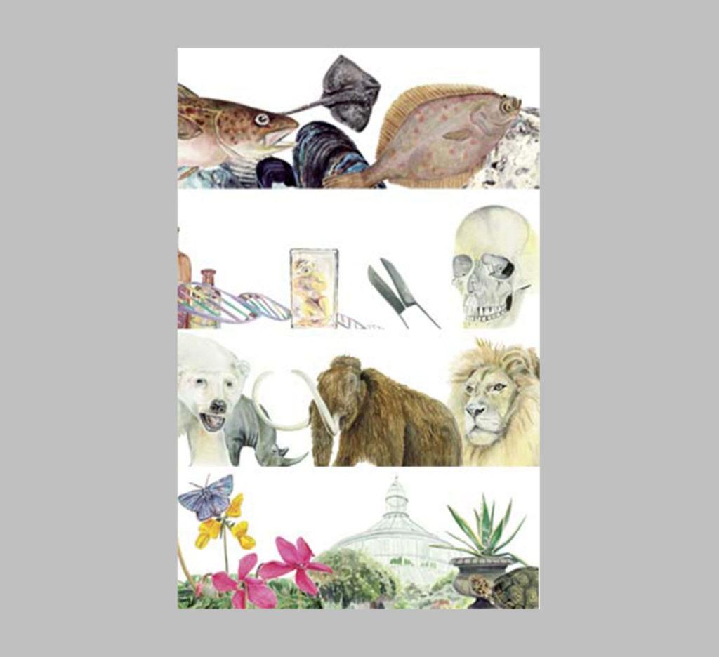 Videnskabelig illustration viser områderne Zoologi, medicin og botanik