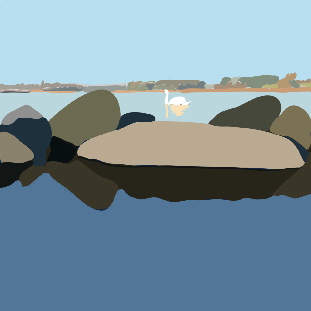 illustration af svane på Holckenhavn Fjord i Nyborg i farver